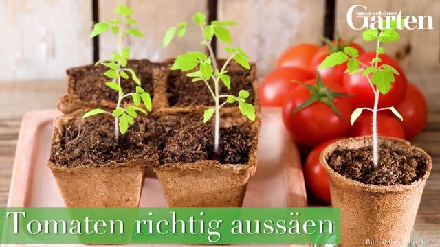 Tomaten Aussaen Anleitung Mein Schoner Garten