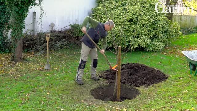 Außergewöhnlich Obstbäume richtig pflanzen - Schritt für Schritt - Mein schöner Garten #MK_88