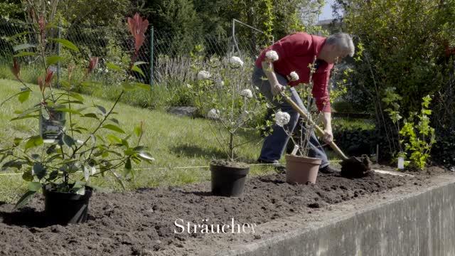 Die Besten Heckenpflanzen Mein Schöner Garten