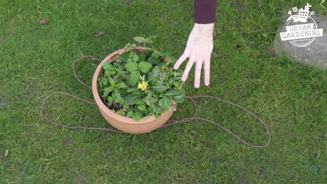 Blumenampel In 5 Schritten Selber Machen