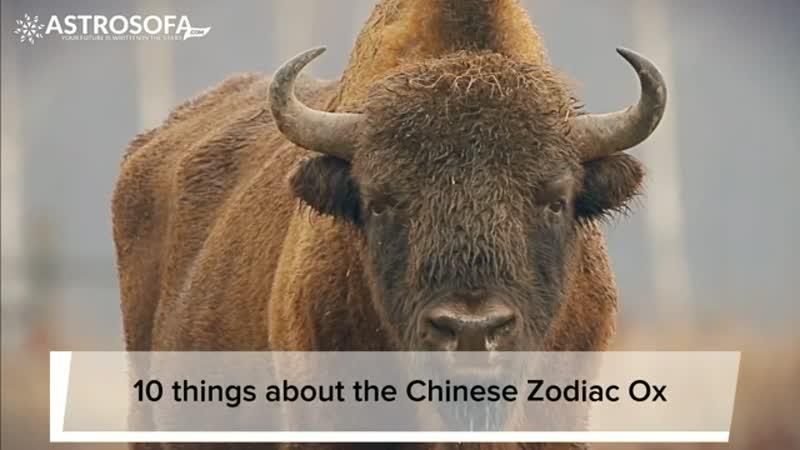 Chinese animal zodiac sign Ox - astrology - astrosofa com