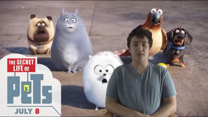 The Secret Life Of Pets Beautiful Animation Original Story Cast