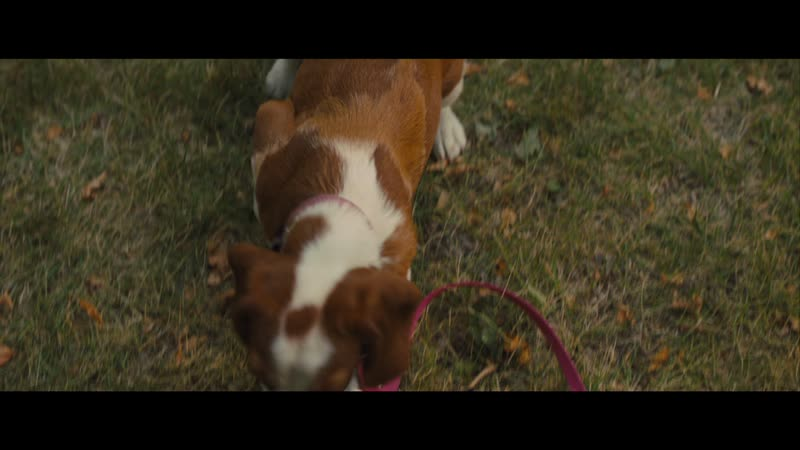 A Dog S Journey Movie Review You Ll Cry And Also Rejoice Movie
